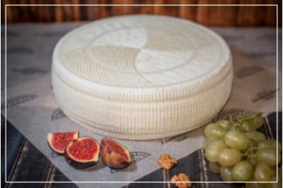 Сыр Качотта молодая 14 дней выдержки